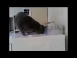 КОТ утащил сигарету :D умный кот ( кот украл взял стырил сигарету сигареты кот курит умные животные звери умный кот ржака прикол