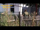 Фрагмент боя в Иловайске когда укры последний раз пытались прорваться в город
