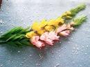 DIY - how to make Gladiolus paper Flowers - cách làm hoa lay ơn từ giấy nhún