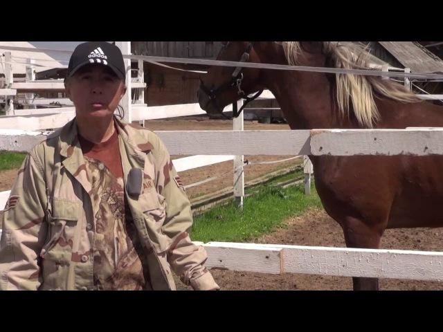 Как стать для лошади авторитетом