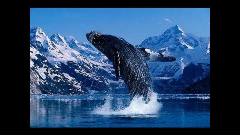 Our Incredible Beautiful World (Amazing nature footage and music)