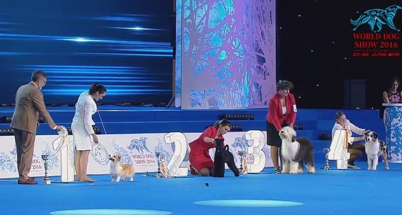 World Dog Show 2016 (Москва) - Страница 5 Jywj1itqVks