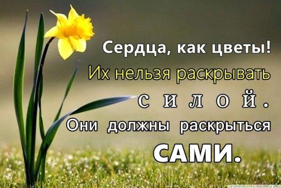 https://pp.vk.me/c630029/v630029366/24a81/IpBlv9iTSwI.jpg
