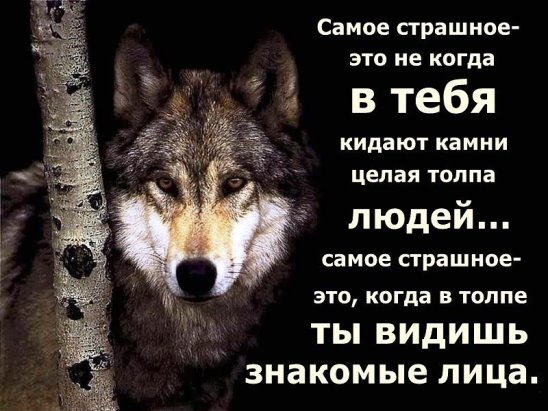 https://pp.vk.me/c630029/v630029366/24af2/SMwnMVZBckI.jpg
