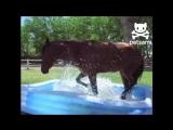 Horse splashes around in a kiddie pool - by PETSAMI