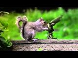 Животные в экшн сценах - Animals in action scenes