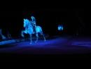 Умная лошадка, красиво танцует
