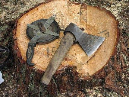В Якутии за незаконную вырубку леса осужден бывший глава наслега
