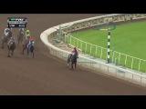 RACE REPLAY: 2016 Santa Ysabel Stakes Featuring Songbird