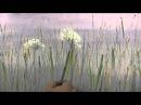 Научиться рисовать полевые цветы масляная живопись уроки рисования в Москве