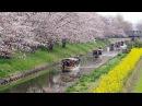 [ 4K Ultra HD ] 近江八幡 春の「水郷めぐり・八幡掘めぐり」OmiHachiman River Cruising in Spring (Shot on RED EPIC)