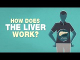 What does the liver do - Emma Bryce