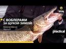 С воблерами за щукой зимой Алексей Шанин Часть 3 Anglers Practical