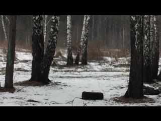 Искали в лесу лосей, нашли верблюдов...