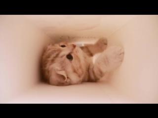 Что делает котёнок в коробке