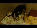 Дружба собаки и кота :)