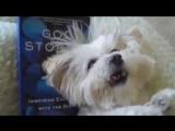 Как чихают разные животные [720p]