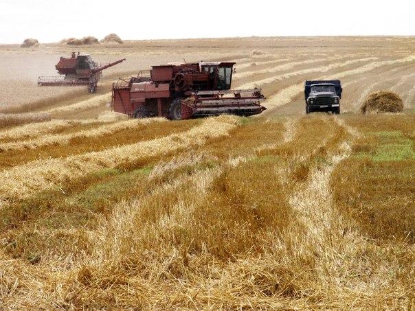 Підготовка до збирання ранніх зернових та зернобобових культур