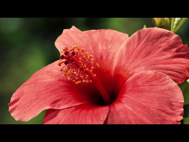 Цветущие цветы. Красота жизни