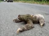 Злой ленивец. Самое смешное видео которое я видел. Ржака до слез видео 2016