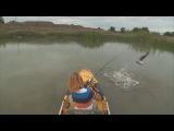 Как клюёт змееголов | vk.comhobby_fishing