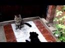 Неугомонный собачка Фунтик и флегматичный тихоня-кот Бася