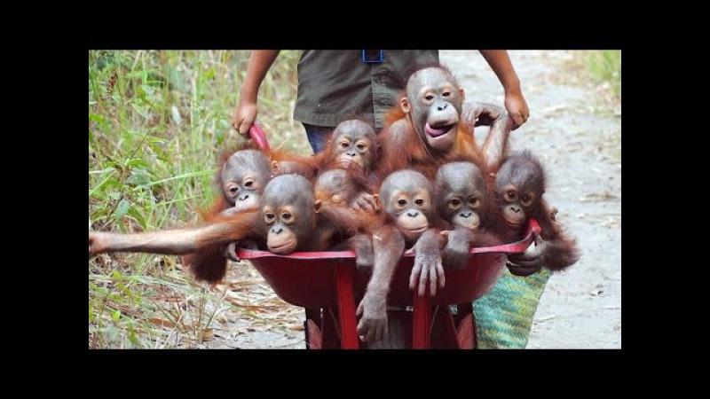 СМЕШНЫЕ и ЗАБАВНЫЕ ОБЕЗЬЯНЫ ( подборка приколов с обезьянами ) 1