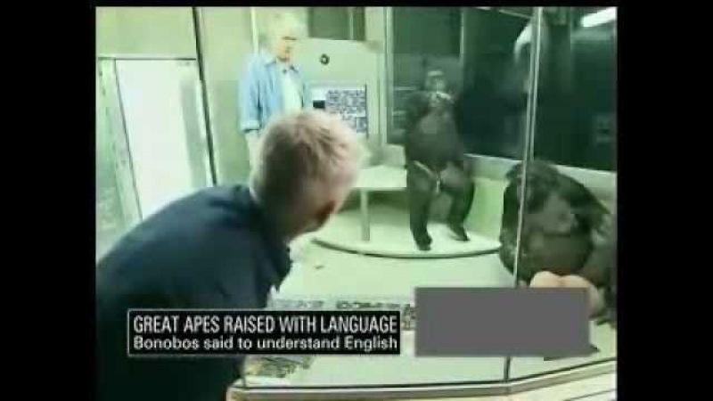 Intelligent Monkeys