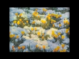 Ф. Шопен - Весенний вальс. Ричард Клайдерман