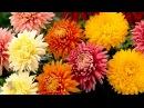 ✦Музыка цветов релакс✦