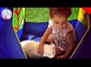 КОШКА МУРКА и три маленьких КОТЁНКА в домике ВИДЕО ДЛЯ ДЕТЕЙ животные кошки