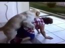 Секс с животными. Смешное видео.