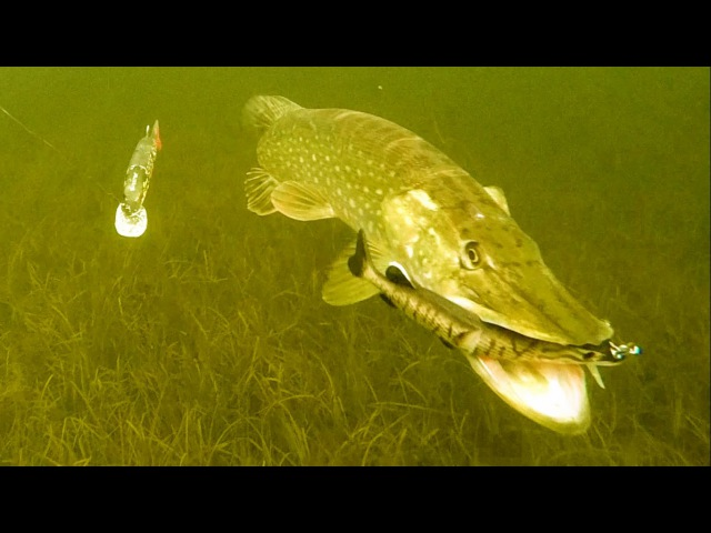 Рыбалка в Ирландии зимой щука на комбинированные приманки Mike the Pike. Атаки под водой