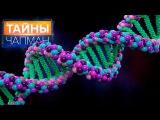 Тайны Чапман - Пули в ДНК
