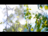 02_листики (до и после)