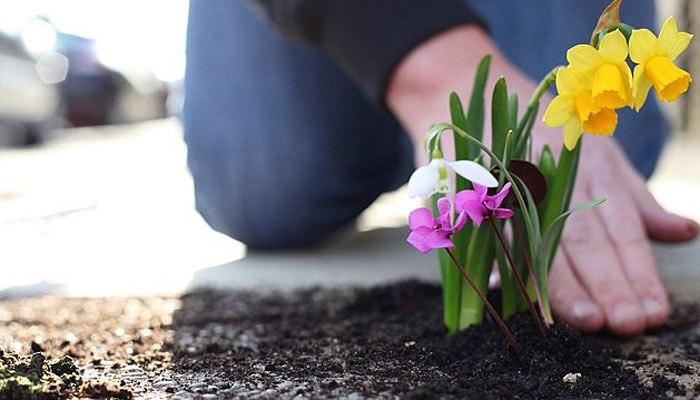 Волонтеры дендрария устранят последствия непогоды в Ботаническом саду
