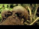 Самые Cтранные в Мире Животные   Чудаки на Суше  Документальный фильм National Geographic