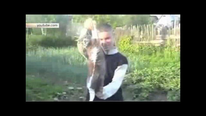 Видео чудовищного убийства кота под Рязанью