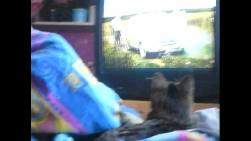 моя кошка Аська смотрит сериал