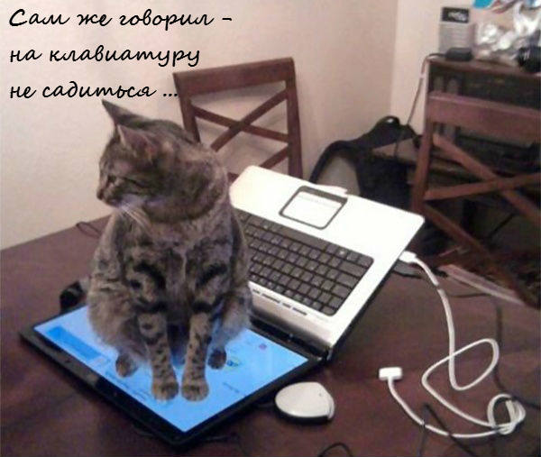 Кот на ноутбуке