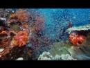 На глубине морской  Under the Sea (2009) BDRip 720p [vk.comFeokino]