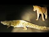 Крокодил пытается отнять добычу у львов, гиена и леопард наблюдают