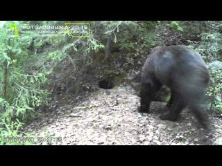 ID11496/Природный парк