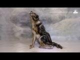 Невероятный бодиарт! Волк