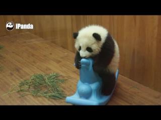 панда катается на детской лошадке