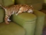 Говорят, я стану тигром, Полосатой, большой кошкой. А пока играю в игры, Хулиганю понемножку!