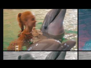 Дельфинарий в Яровом 2016
