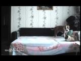 Этому псу запрещено находиться на кровати. Хозяйка решила установить скрытую камеру и проверить, что он делает, когда никого нет