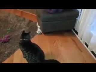 Приколы с животными #4