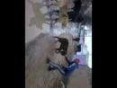 Чимпион сабачий бой из ТАЙСН